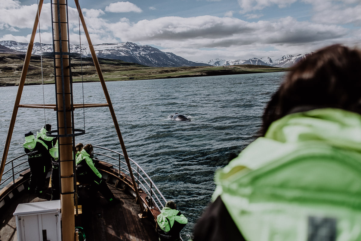 Island Whalewatching